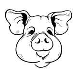 Pig head sketch black and white Stock Images