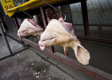 Pig heads. For sale in a South Korean street stock photo