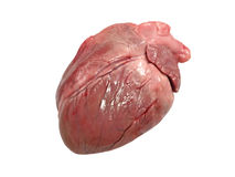 Pig heart isolated. Royalty Free Stock Photo