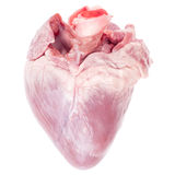 Pig heart. On white background stock image