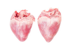 Pig heart. On white background stock photography