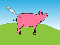 Pig with hypodermic needle Stock Images