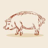Pig  Illustration. Hand drawn emblem Royalty Free Stock Photo