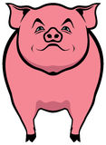 Pig illustration Royalty Free Stock Images