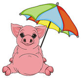 Pig with imbrella Royalty Free Stock Photography