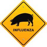 Pig influenza. Swine transmittable virus pig influenza Stock Photos