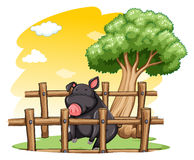 Pig inside the fence Royalty Free Stock Image