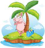 A pig in an island Stock Photo