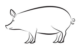 Pig isolated on white. Simplified Contour Pig Silhouette isolated on white Royalty Free Stock Images