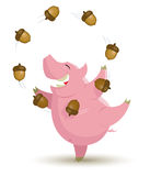 Pig is juggling acorns Stock Photos