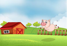 A pig jumping at the farm Stock Images