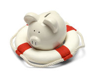 Pig and Life Preserver. Pig in a Life Preserver Isolated on White Background Stock Photo