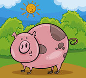 Pig livestock animal cartoon illustration Stock Photos
