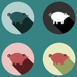 Pig with long shadow - four colored variations Royalty Free Stock Photo