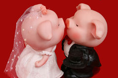 Pig Of Love. As this is the year of pig base on the chinese calendar. Let tis pig be a gift for your wedding day this year Stock Photos