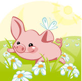 Pig lying on a flower meadow. Royalty Free Stock Photography