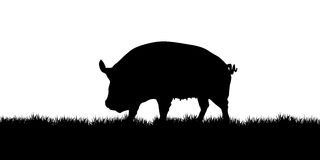 Pig on a meadow. A vector pig on the meadow Royalty Free Stock Image