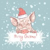 Pig. Merry Christmas funny card design with cartoon pig in Santa`s hat . royalty free illustration