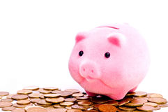 Pig on money Royalty Free Stock Photo
