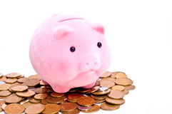Pig on money Stock Images