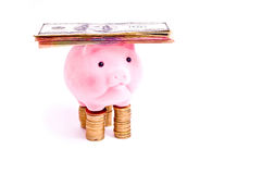 Pig with money Royalty Free Stock Photography