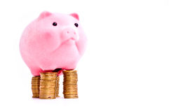 Pig on money Royalty Free Stock Image