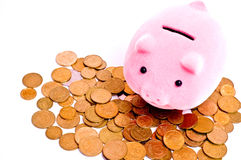 Pig on money Stock Photography