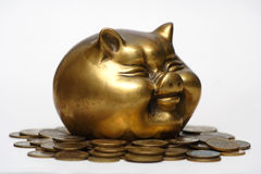 Pig and money_18. A gold pig and money Stock Images