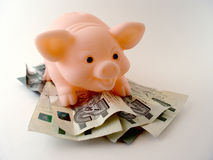 Pig with Money Stock Photo