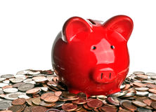 Pig, money, and savings Royalty Free Stock Photo