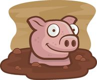 Pig in Mud. A pig wallowing in a mud bath Stock Images