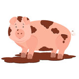 Pig in mud. Cute pig dirty in mud. . White background Royalty Free Stock Photo
