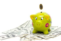 Pig & Money. Money dollar dollars business money box pig credit bank savings Royalty Free Stock Photography