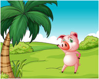 A pig near the coconut tree Royalty Free Stock Image