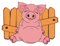 Pig near the fence Stock Image