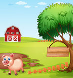 A pig near the tree with a hanging empty signboard Stock Photo