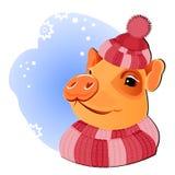 Pig in knitted hat. Illustration pig on blue backdrop, funny, fine, happy, good, kind. Vector. Colorful christmas  ornamental design for backgrounds, postcards stock illustration