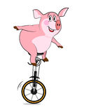 Pig on one wheel. Royalty Free Stock Photos