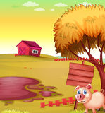 A pig outside the fence with an empty signboard and a barn Stock Photography