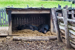 Pig Pen on the Grounds of Booker T. Washington National Monument Stock Image