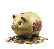 Pig - Piggy. Is on the money Royalty Free Stock Photography