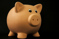 Pig piggy bank Stock Image