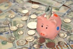Pig piggy bank Stock Photography