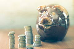 Pig piggy bank with coins Stock Photography