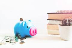 Pig piggy bank, coins, dollar, saving money concept on white background Stock Images