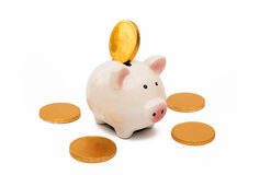 Pig piggy bank with coins Stock Photo