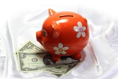 Pig piggy bank Stock Photos