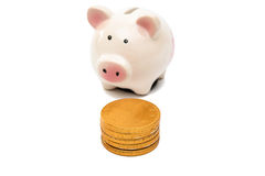 Pig Piggy Bank With Coins Stock Images