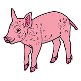 Pig Piggy boar icon cartoon design abstract illustration animal Stock Photos