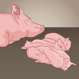 Pig And Piglets Stock Photo
